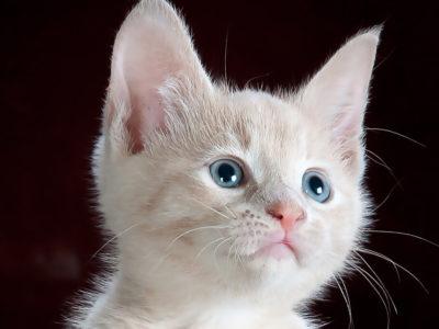 キティちゃんがハリウッド映画化!!実写でキティちゃんが動く!?のアイキャッチ